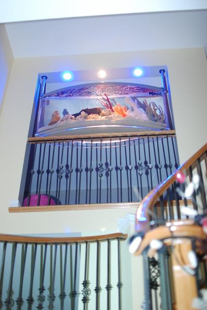 Review of aqua sculpture aquatic design aquariums for Spacearium aquariums
