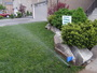 photo of New Lawn System from a Urban Lawn Sprinklers review