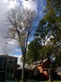photo of Ash Tree Removal from a Toronto Tree Removal review