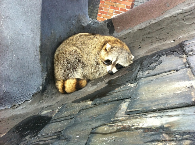 Gotcha Wildlife | Pest & Animal Control in Toronto | HomeStars