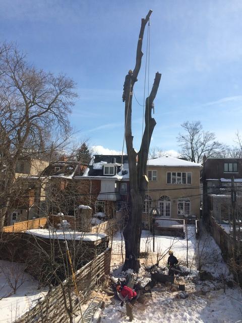 city toronto tree removal permit application