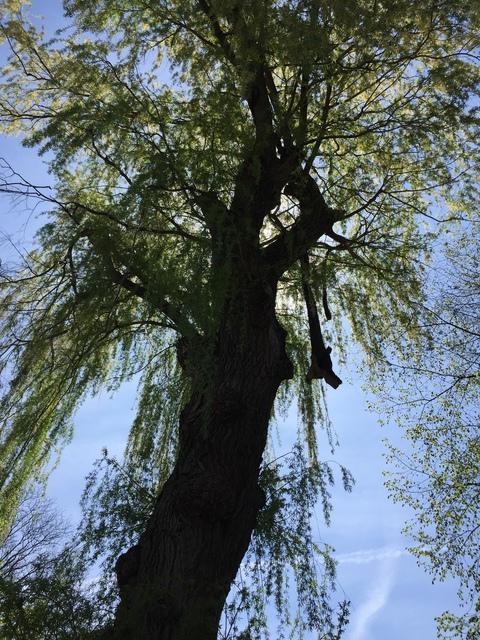 Castor tree care services homestars for Castor services
