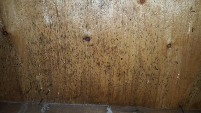 Healthy Home Center Mold Detection Amp Removal In Ottawa