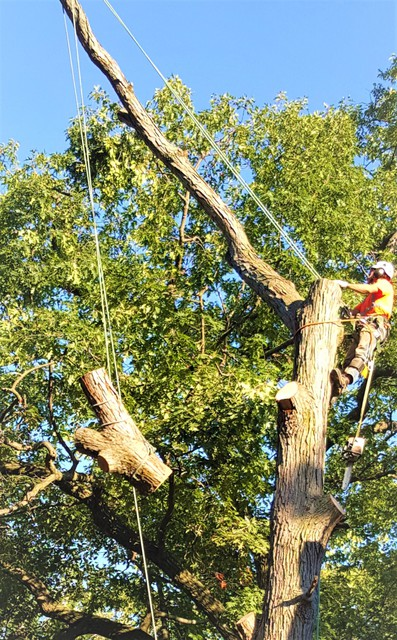 The Real Tree Masters Inc Tree Service In Etobicoke